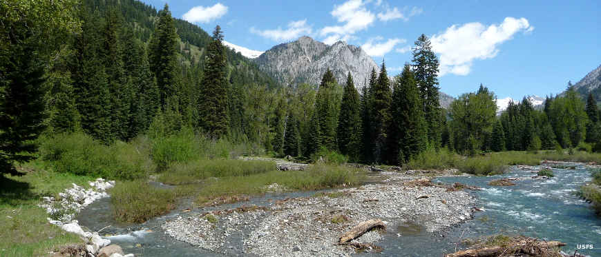 Looking upstream along a braided Eagle Creek, deep in pine forest with high mountains rising beyond