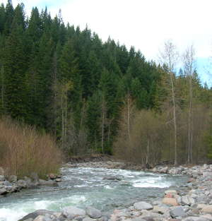 A view of Badger Creek