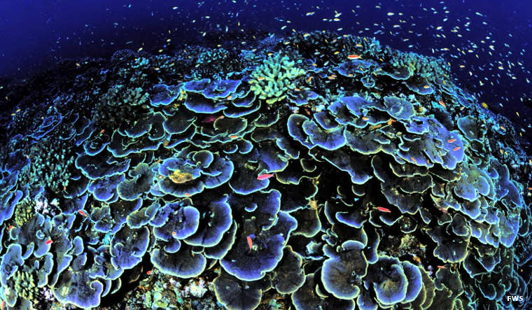 Coral around Jarvis Island