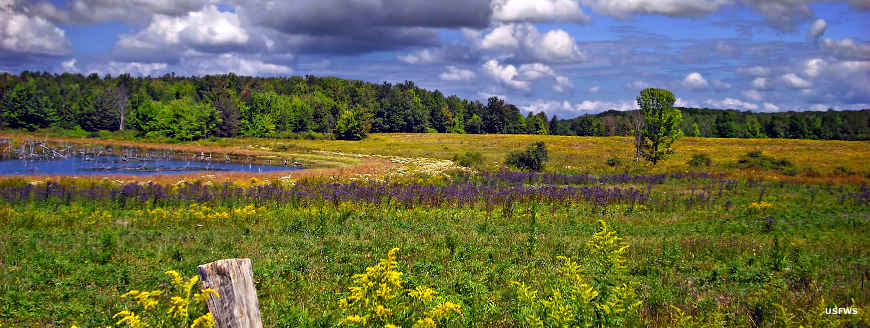 Looking across a meadow and a pond at Erie National Wildlife Refuge