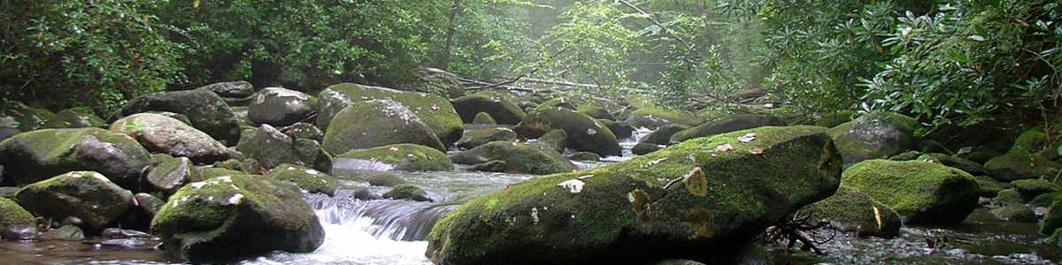 Tennessee: Citico Creek in the Citico Creek Wilderness