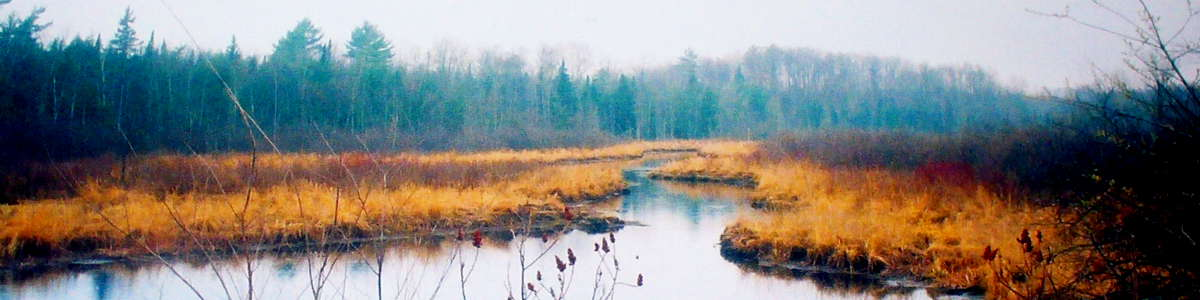 Wisconsin: Fog across a marsh in Chequamegon-Nicolet National Forest