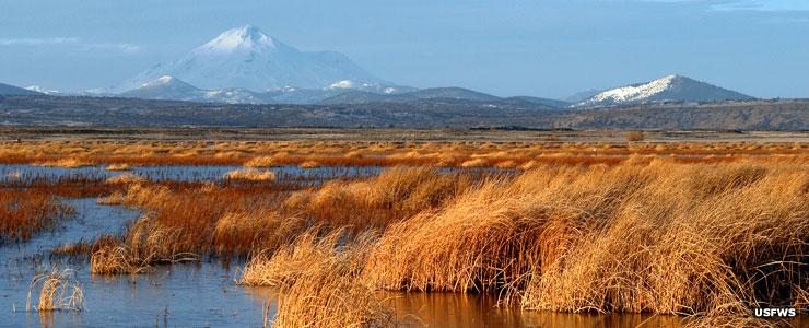 The Lower Marsh at Tule Lake National Wildlife Refuge
