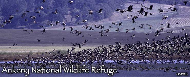 Ankeny National Wildlife Refuge
