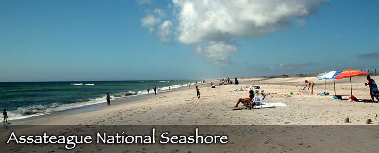 Assateague National Seashore