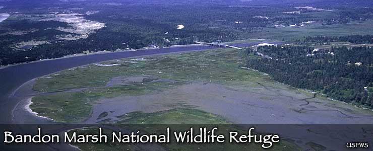 Bandon Marsh National Wildlife Refuge