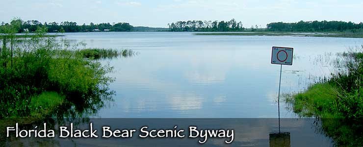 Florida Black Bear Scenic Byway