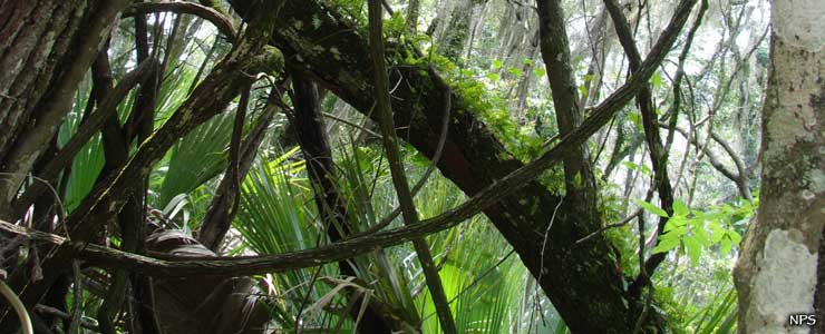Vegetation in the canopy at Timucuan Ecological and Historic Preserve