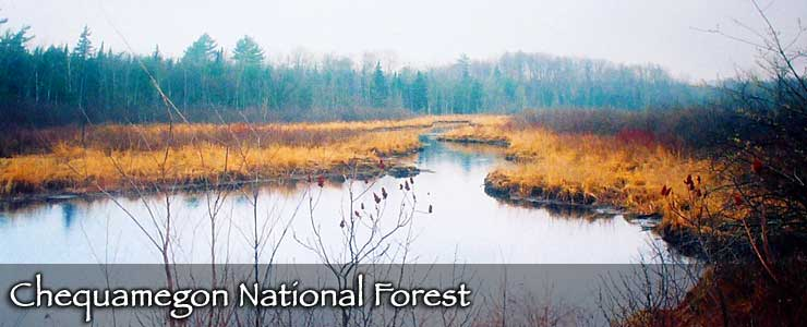 Chequamegon National Forest