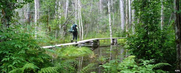 Boardwalk across the beaver ponds on the Chilkoot Trail
