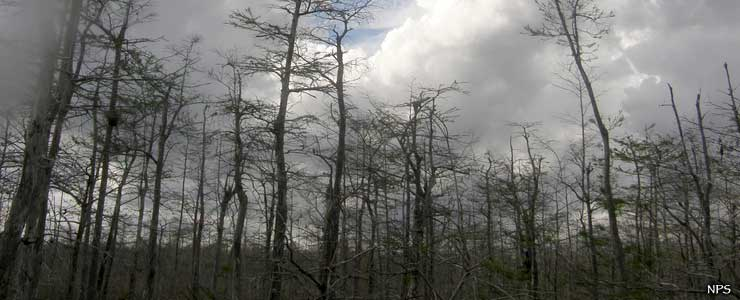 Looks like a storm coming over Big Cypress