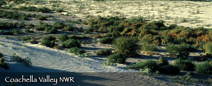 Coachella Valley National Wildlife Refuge, California