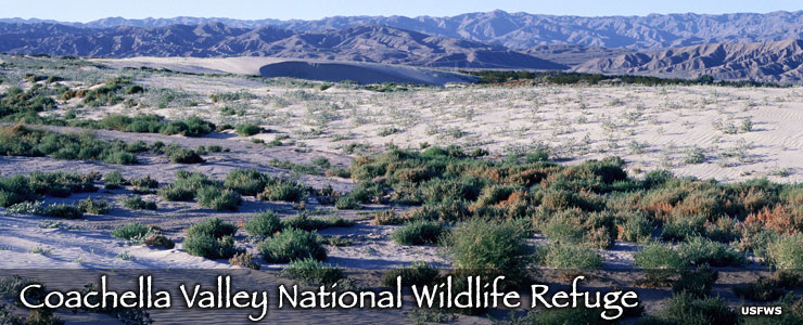 Coachella Valley National Wildlife Refuge