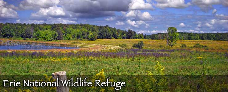 Erie National Wildlife Refuge