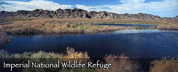 Imperial National Wildlife Refuge