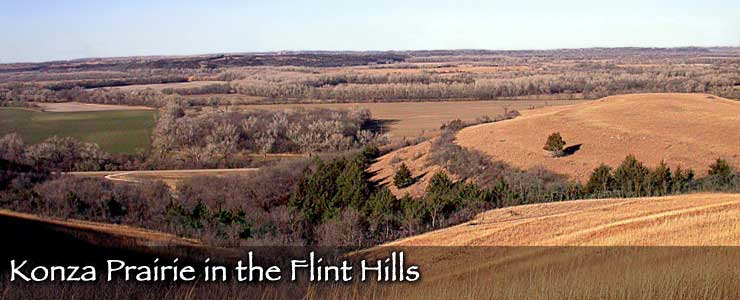 The Konza Prairie in the Flint Hills
