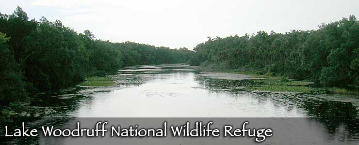 Lake Woodruff National Wildlife Refuge