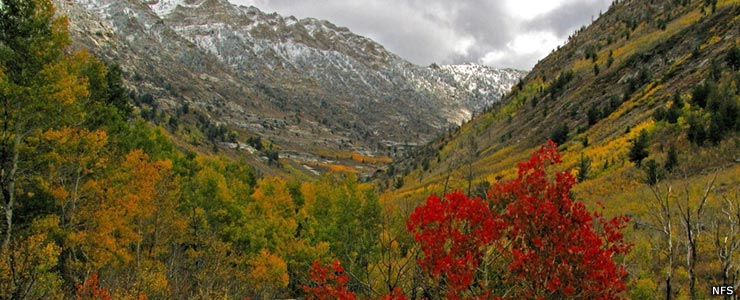 A fall view in Lamoille Canyon in the Ruby Mountains