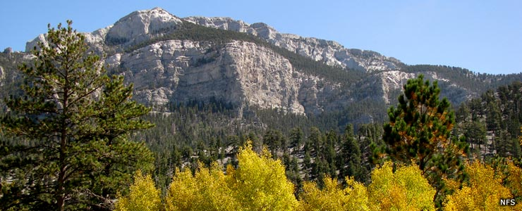 A view in Lee Canyon in Mt. Charleston Wilderness