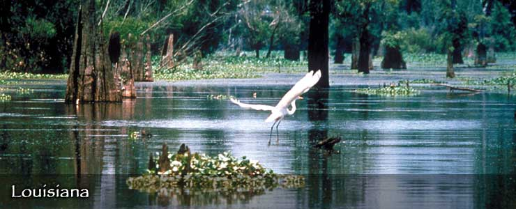 Atchafalaya Basin National Wildlife Refuge, Louisiana
