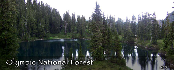 national forests in washington the sights and sites of