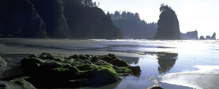In the Ozette area of Olympic National Park