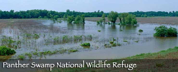 Panther Swamp National Wildlife Refuge