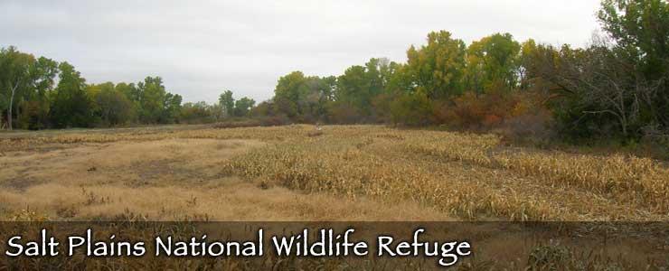 Salt Plains National Wildlife Refuge