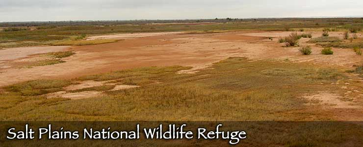 Salt Plains National Wildlife Refuge