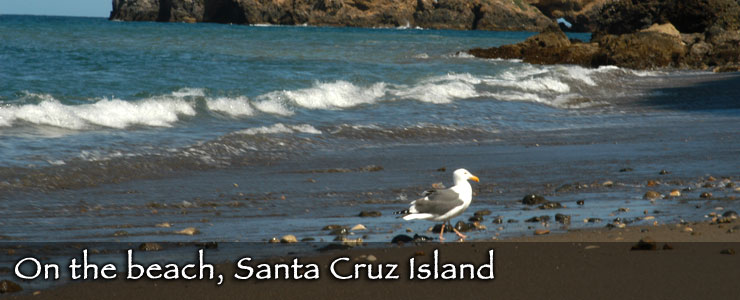 On the beach, Santa Cruz Island