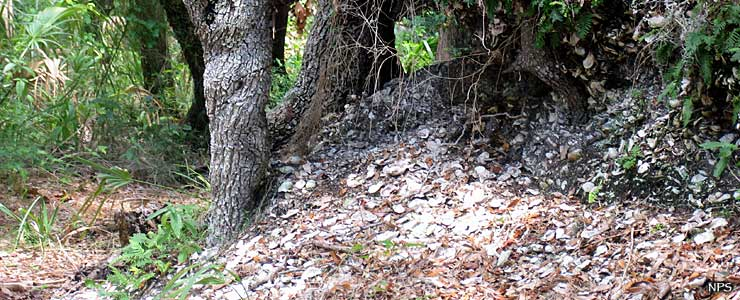 A shell midden on Fort George Island