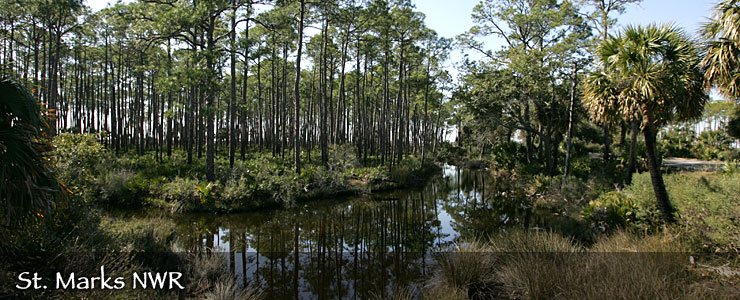 St. Marks National Wildlife Refuge, Florida