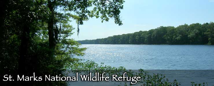St. Marks National Wildlife Refuge