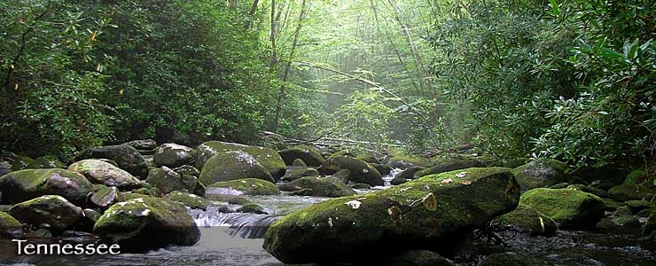 South Fork Citico Creek Wilderness, Tennessee