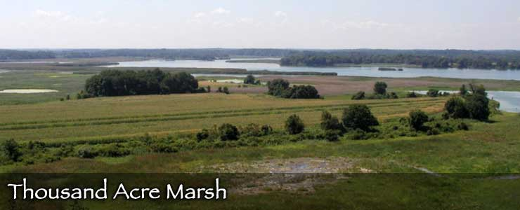 Thousand Acre Marsh