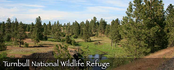 Turnbull National Wildlife Refuge