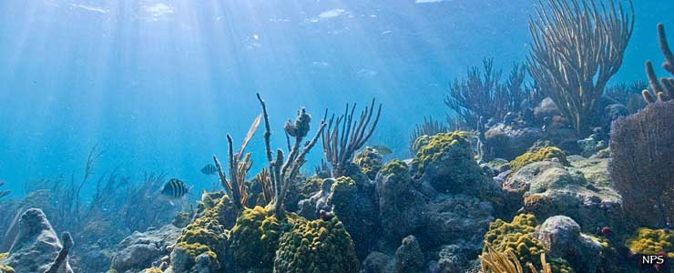 An underwater scene among the coral