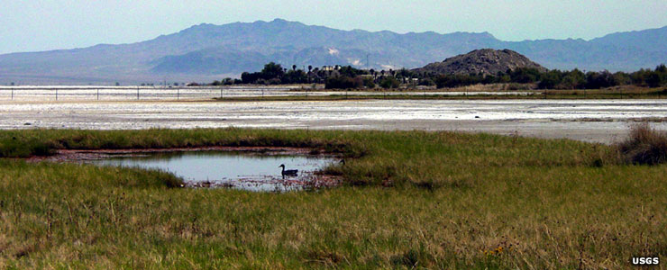 Zzyzx Spring and Soda Lake, Mojave National Preserve