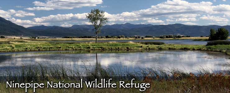Looking across the ponds and wetlands of Ninepipe National Wildlife Refuge to the Cabinet Mountains beyond