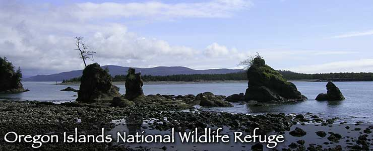 Rocks sticking up out of the water and along the water's edge at  Oregon Islands National Wildlife Refuge