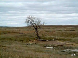 An old snag at Grand River National Grassland
