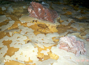 Rafts of calcite left after pools of water evaporated