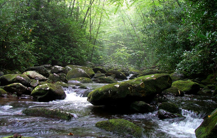 South Fork of Citico Creek, Citico Creek Wilderness
