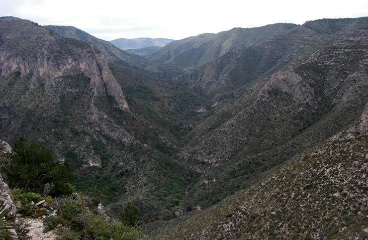 A view of North McKittrick Canyon from The Notch