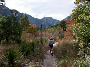 Along the McKittrick Canyon Trail