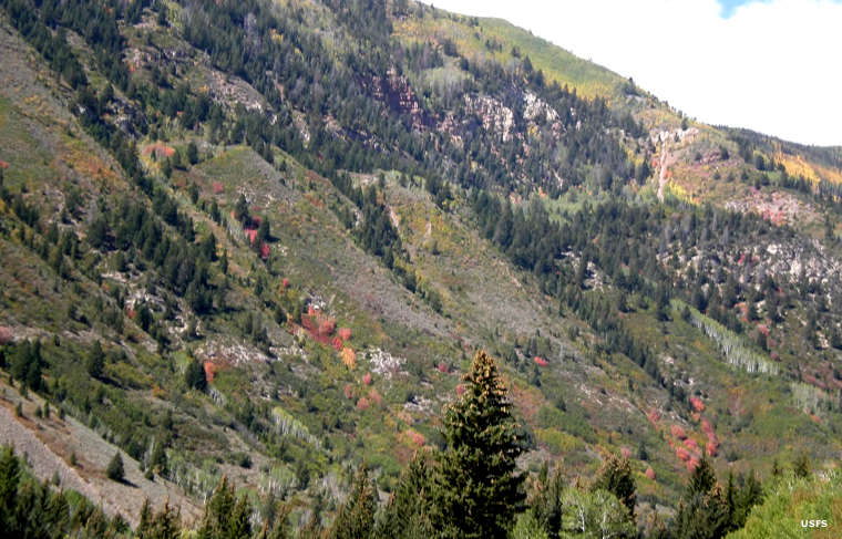 A typical steep hillside in the foothills of the Uinta Mountains