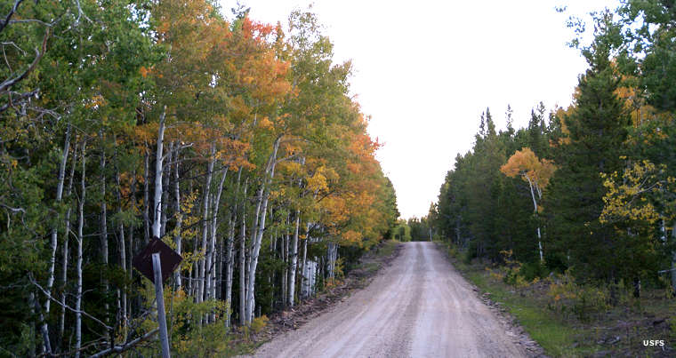 Traveling on the dirt road through thick forest with leaves changing color in the fall, along the Red Cloud Loop Scenic Backway