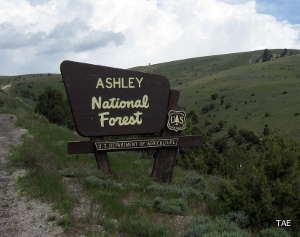 Sign marking the boundary of Ashley National Forest