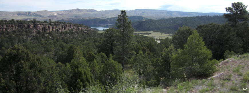 Looking across a forested valley in Ashley National Forest between Flaming Gorge Dam and Red Fleet Reservoir