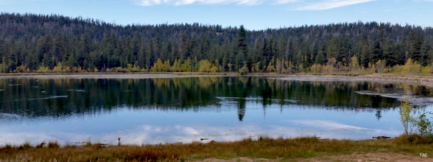 Looking across a large pond on the Markagunt Plateau in Dixie National Forest